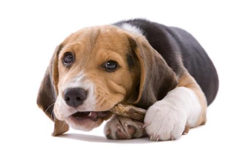 Raw Food Diet for Canine Anxiety