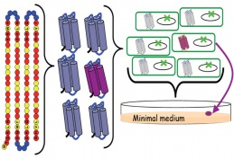 Synthetic proteins enable the growth of living cells