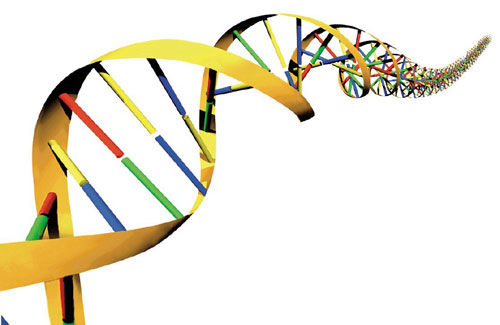 DNA can be influenced and reprogrammed?