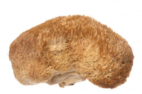 Lion's Mane Mushroom – The Secret Extract To Stimulate The Growth of Nerve Cells