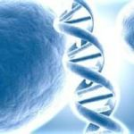 There's No Such Thing As Genetic Health Problems (Well… Almost.)