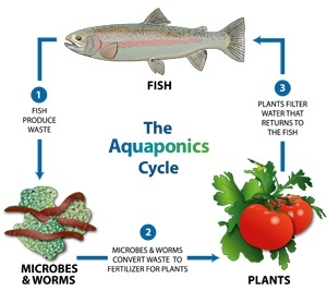 Growing Food With Aquaponics