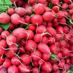 10 Health Benefits of Radishes and 5 Delicious Recipes