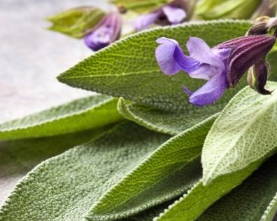 Use Sage To Improve Memory, Increase Attentiveness, and More