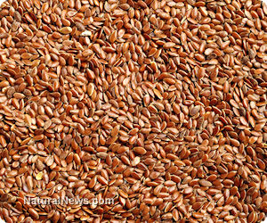 Genetically-Modified Flax Discovered In Over 30 Countries