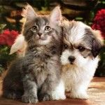 3 Studies Confirm The Healing Powers of Pet Ownership