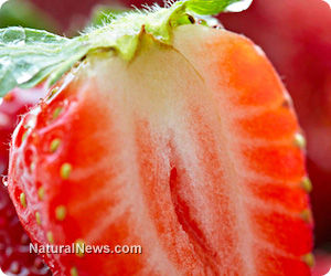 Strawberries – A Flavorful Protector Against a Host of Chronic Disease