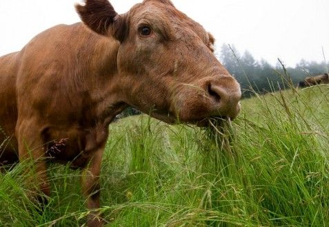 Kiss My Grass: What You NEED to Know About Grass Fed Labeling and Other Food Certifications
