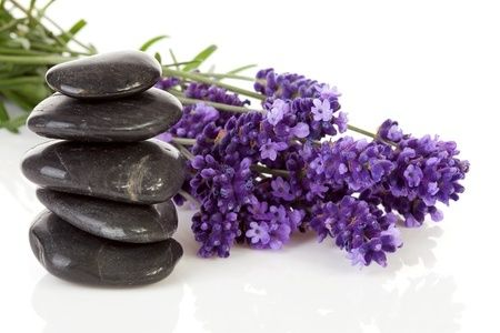 The Purple Versatile Herb— Lavender