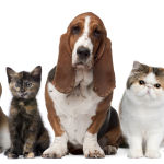 How To Put Together First Aid Kit For Pets