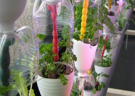 How To Easily Grow Your Own Food!
