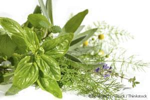 How to Harness the Power of Medicinal Plants