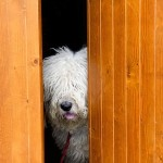 Can Dogs Detect More Than Just Your Mood?
