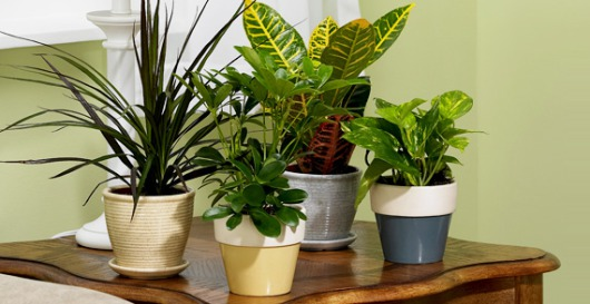 Top 10 Air Purifying Plants For Your Home