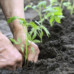 The 5 Reasons You Should Be Starting a Garden