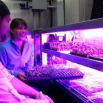 Shipping Containers Transform into Hydroponic Farms