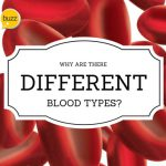 Why Are There Different Blood Types?