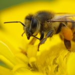 Bee Venom and Beauty – What's All the Buzz About?
