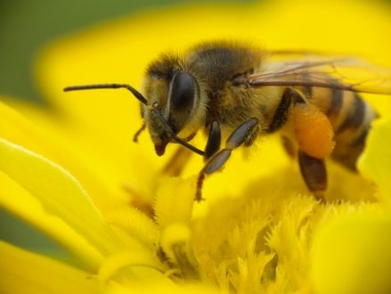 <thrive_headline click tho-post-37050 tho-test-69>Bee Venom and Beauty – What's All the Buzz About?</thrive_headline>