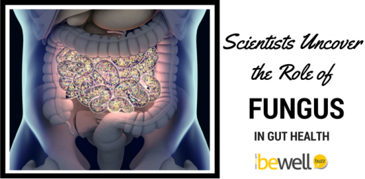 Scientist Uncovers the Role of Fungus in Gut Health