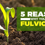 5 Reasons Why Fulvic Acid Is Good for You