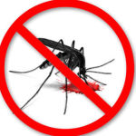 5 Natural Insect Repellents