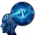 Phosphatidylserine For Brain Nutrition