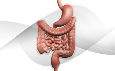 Image result for digestion