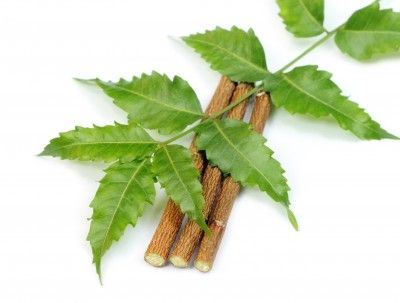 What Is Neem, Its Uses and Health Benefits.