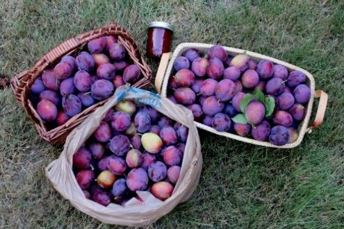 The Health Benefits of Plums
