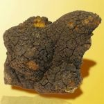 Amazing Health Benefits of Chaga Mushroom