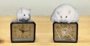 Regulate Your Biological Clock To Keep Obesity And Diabetes At Bay