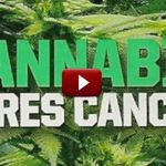 What If Cannabis Cured Cancer?