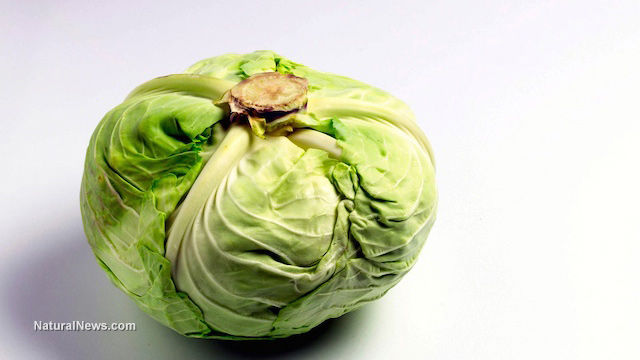 Cabbage Prevents and Fights Chronic Diseases