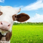 10 Insanely Awesome Colostrum Benefits That Will Have You Running To The Supermarket
