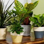 Top 10 Air Purifying Plants for Your House