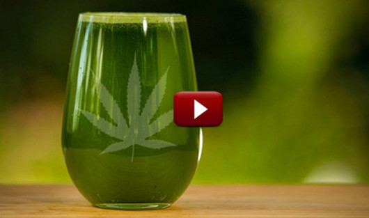 Learn How to Juice Marijuana Leaves Correctly