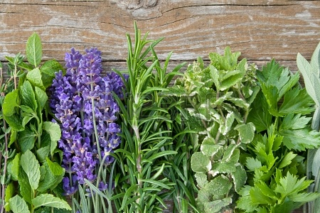 These Healing Herbs Are Perfect for Summer Heat