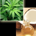 Coconut Oil & Cannabis: Cancer Fighting Miracle