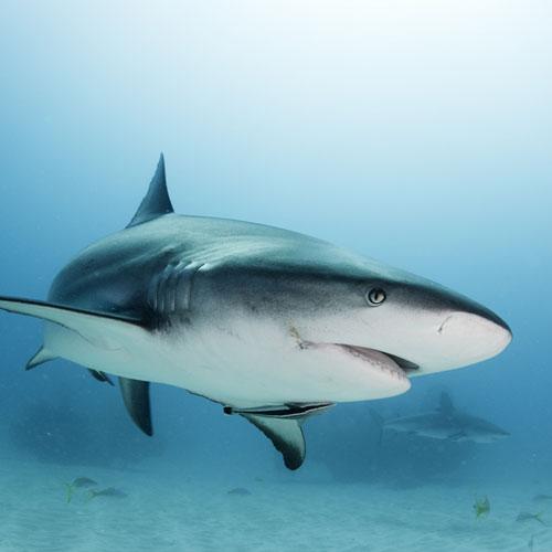 contaminated-fish-shark
