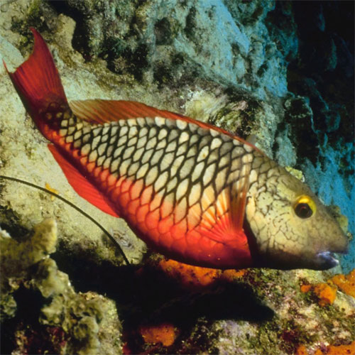 contaminated-fish-tile