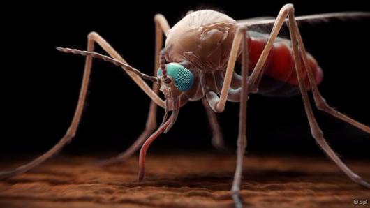 malaria-mosq