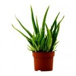 Growing Medicinal Herbs for Natural Remedies