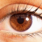 The Secrets of Eye Movement