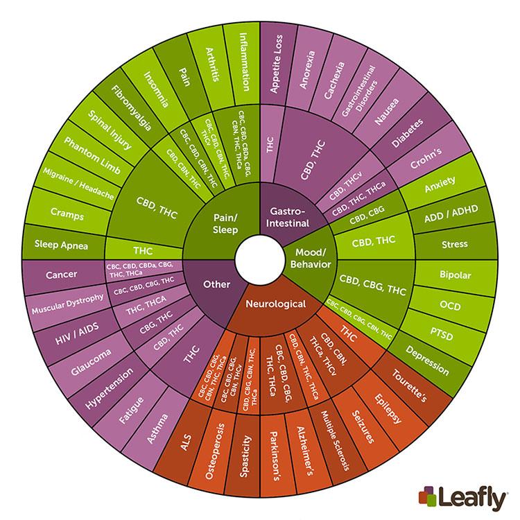 Cannabinoids-Infographic_sm