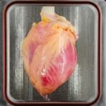 Artificial Heart Transplant Created in Lab