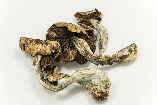 psilicybin-mushrooms