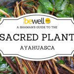 A Shaman's Guide to the Sacred Plant Ayahuasca