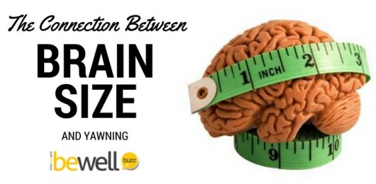 <thrive_headline click tho-post-37068 tho-test-102>A Surprising Link Between Yawning and Brain Size</thrive_headline>