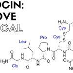 Oxytocin: The Warm Fuzzies of Brain Chemistry